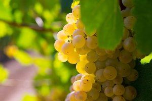 istock-raisins-lfds